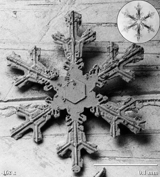 What everyone thinks of when they think of snowflakes. Six points, symmetrical, very detailed, and very pretty.