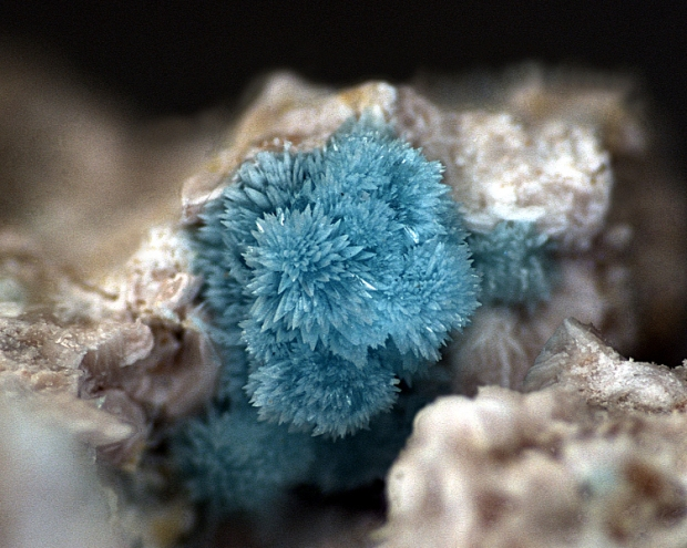 A light blue crystal with lots of tiny spines radiating from the center, making it look like a flower or a snowflake.