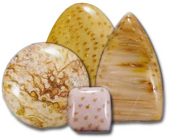 A group of four honey-yellow cabochons shaped like a circle, oval, triangle, and square. They have brown dots and stripes in different patterns, similar to the other petrified palmwood.