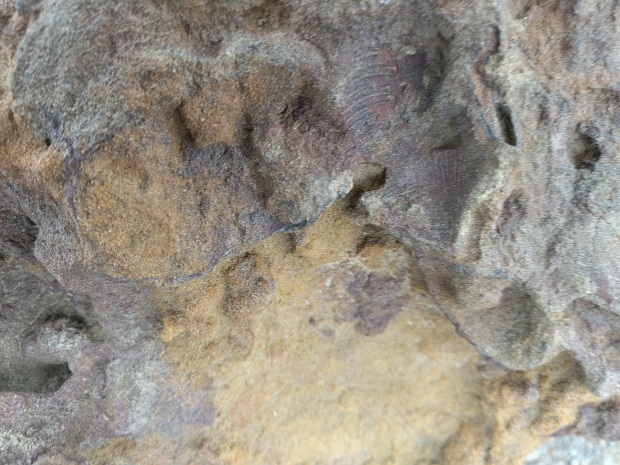 fossil in iron