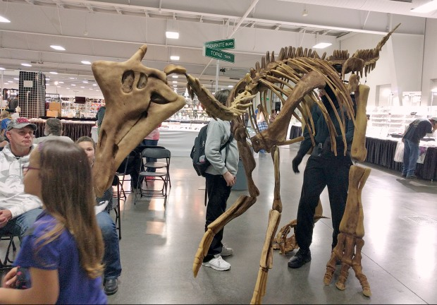 Mr. Bones dinosaur walking around