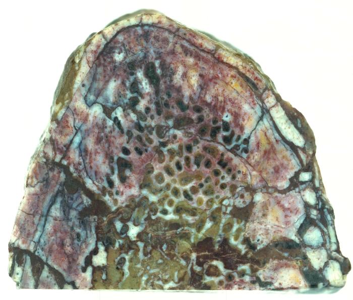 dinosaur bone collagen protein